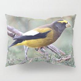 Poised: Evening Grosbeak Pillow Sham