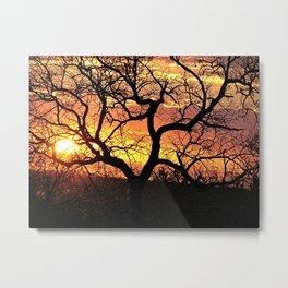 African Sunset Savana Tree Branches Silhouette Metal Print