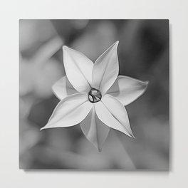 Flora Blanca Metal Print