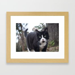 Cat on the prowl Framed Art Print