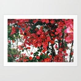 Thorny in Magenta Art Print