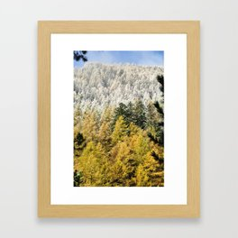 Colours Of The Forest Framed Art Print