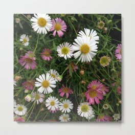 Pink and White Daisies - Vectorized Photographic Image Metal Print