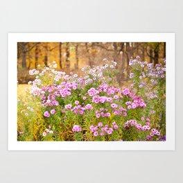 Pink Aster flowering plants Art Print