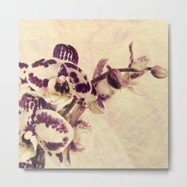 Orchids 2 Metal Print