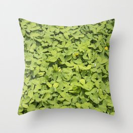 Green Clover Patch with Yellow Flowers in Nicaragua Throw Pillow