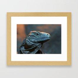 Blue Iguana Framed Art Print