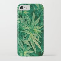 marijuana iPhone & iPod Cases featuring Marijuana Plants  by Limitless Design