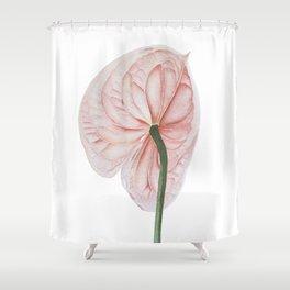 Pink Anthurium Shower Curtain