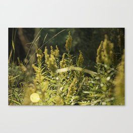 Mountain Meadows 01 Canvas Print