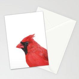 Northern Cardinal portrait Stationery Cards
