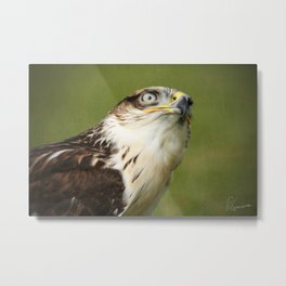 Ferruginous Hawk I Metal Print