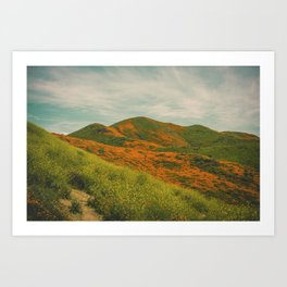 California Poppies 034 Art Print