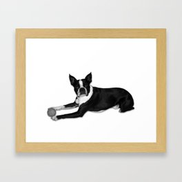 Fetch Boston Terrier B/W Framed Art Print