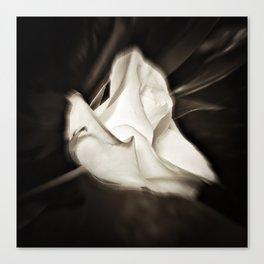 rose in wind Canvas Print