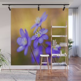 Spring Wildflowers, Beautiful Hepatica in the forest on a sunny and colorful background #decor #soci Wall Mural