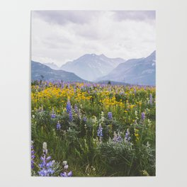 Waterton Wildflowers Poster