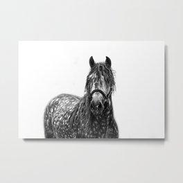 dappled stallion Metal Print