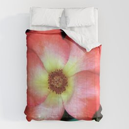 Poppin' Play-boy Rose Comforters