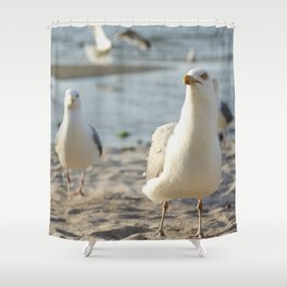 Curious seagulls in front of the camera Shower Curtain