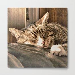 Sleeping Tigers Metal Print