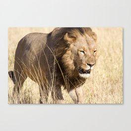 Looking for my Pride Canvas Print