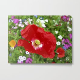 red poppy XII Metal Print