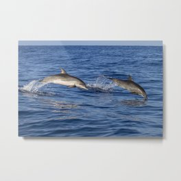 Dolphins Jumping Out of the Ocean Metal Print