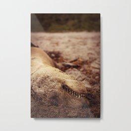 Death of a seal  Metal Print