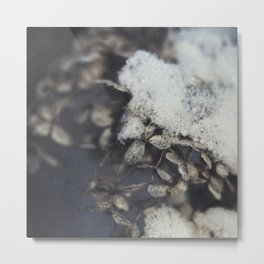 snow and hydrangea Metal Print