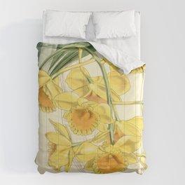 Dendrobium chrysotoxum Comforters