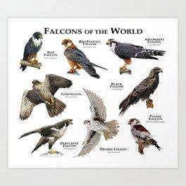 Falcons of the World Art Print