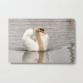 Lone mute swan Metal Print
