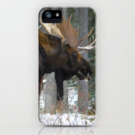 Massive male moose on the loose in Jasper National Park iPhone Case