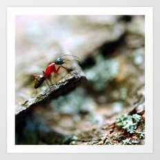 Ant Insect Photography, Nature, Macro, Home Decor Art Print