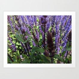 Through the Lavender Art Print