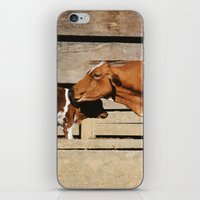 cows iPhone & iPod Skins featuring Cows by Ana Francisconi