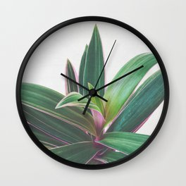 Oyster Plant Wall Clock