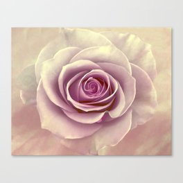 Tea Rose Painterly Abstract Canvas Print
