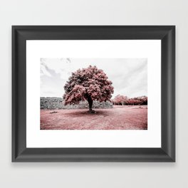 Dzibilchaltun Tree Framed Art Print