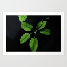 Black on green Art Print
