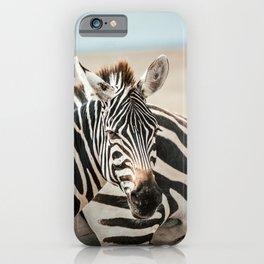 Zebra in Masaai Mara, Kenya, Africa iPhone Case