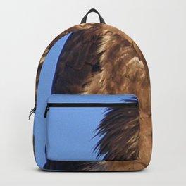 Golden Eagle on the Kenai Backpack