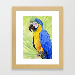 Blue & Gold Macaw Framed Art Print