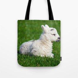 A Sleepy Newborn Lamb In A Field Tote Bag