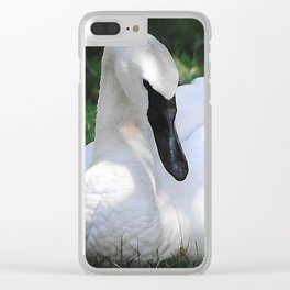 Trumpeter Swan at Rest Clear iPhone Case
