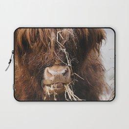 Highland cow feeding on straw on a frosty winters morning. Norfolk, UK. Laptop Sleeve