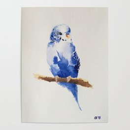 A little birdy told me... Poster