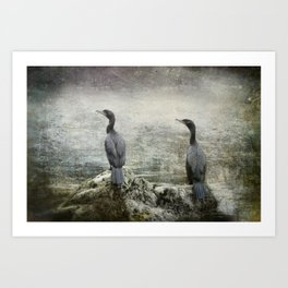 Two Cormorants Art Print