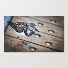 Boardwalk Bird Canvas Print
